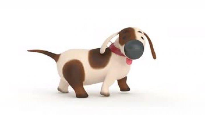 Wagging dog test